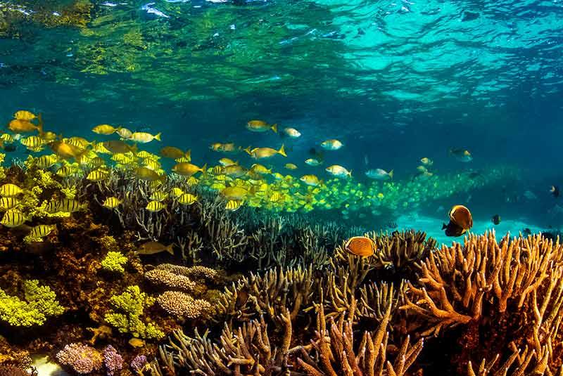 نینگالو استرالیا