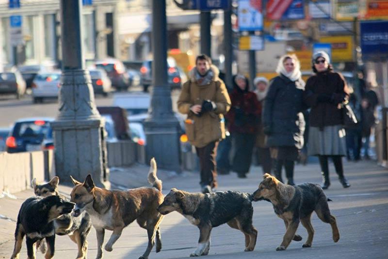 سگ های ولگرد مسکو