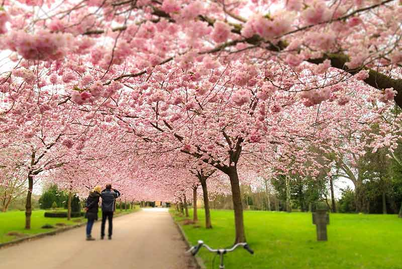 سفر رمانتیک کپنهاگ
