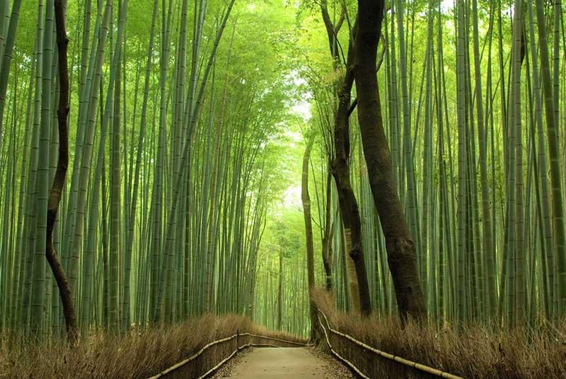 آراشیاما کیوتو