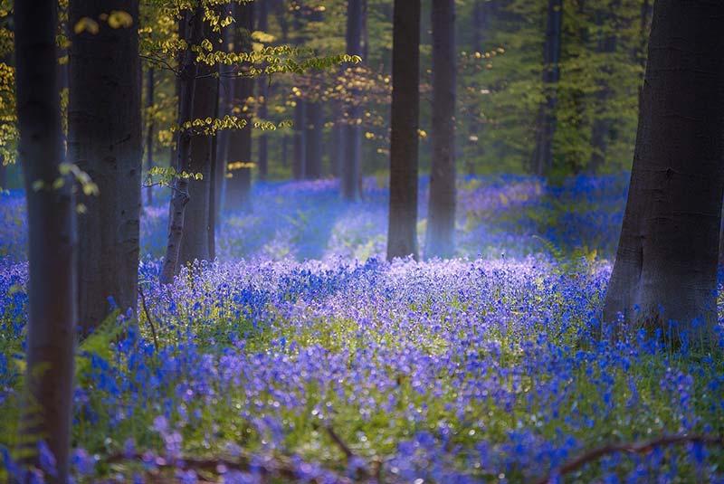 جنگل های بلژیک