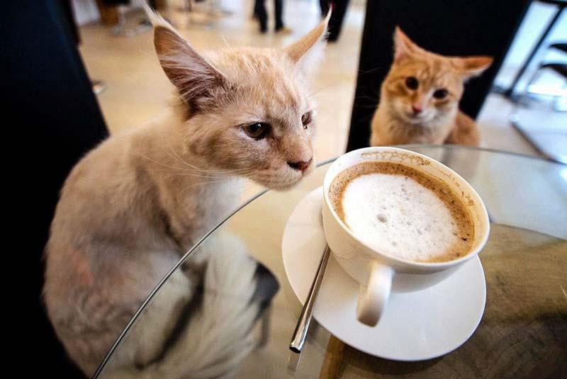 کافه حیوانات سئول