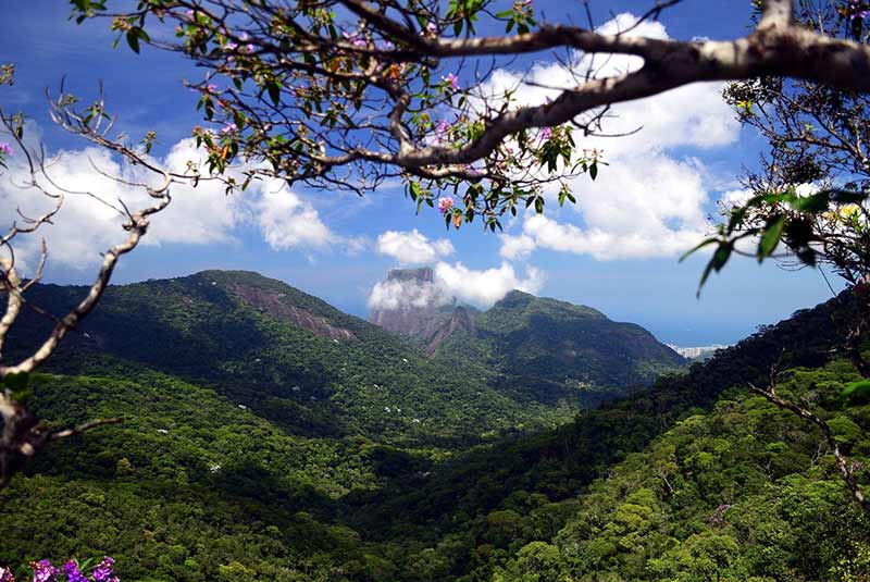 جنگل ریودوژانیرو