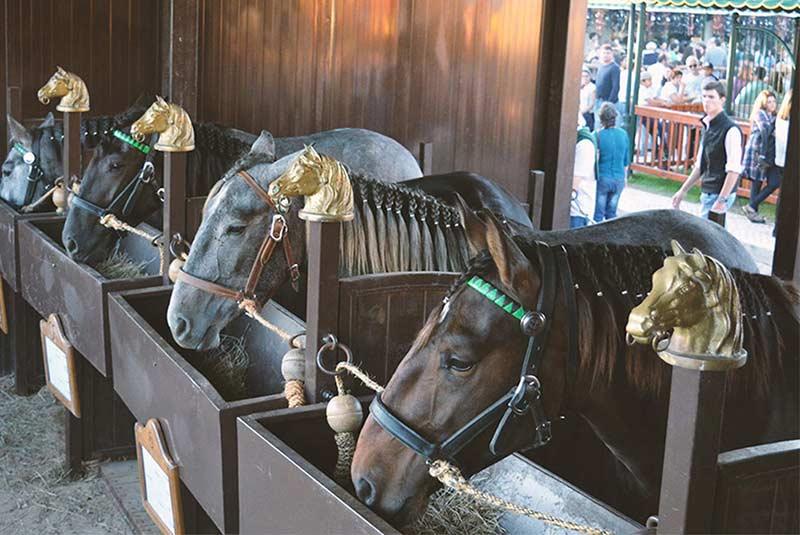 جشنواره اسب پرتغال