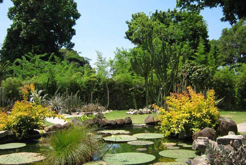 باغ گیاه شناسی ریو