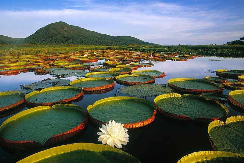 پارک های ملی برزیل
