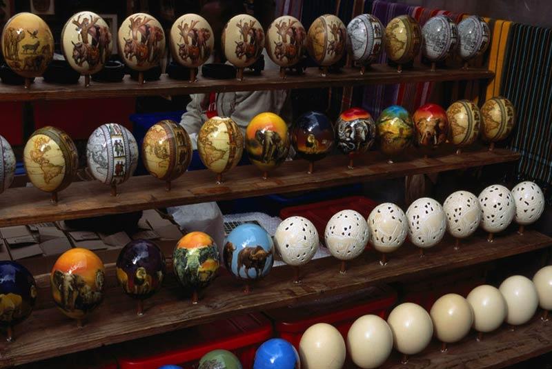 تخم شترمرغ کیپ تاون