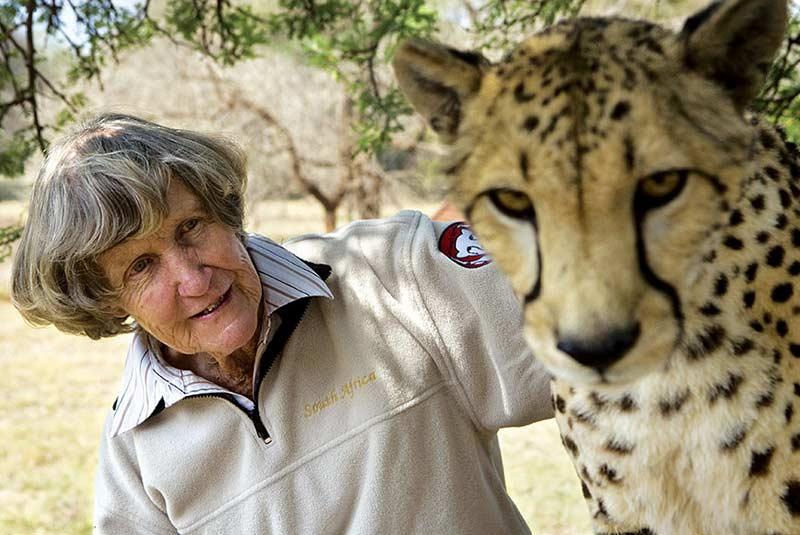 یوزپلنگ های وحشی آفریقای جنوبی