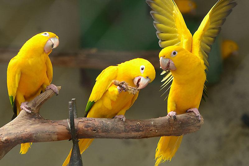 باغ وحش ریودوژانیرو
