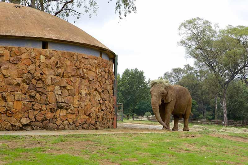 باغ وحش ژوهانسبورگ