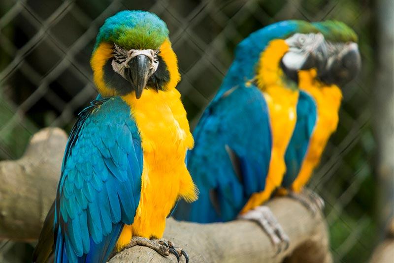 باغ وحش های سائوپائولو