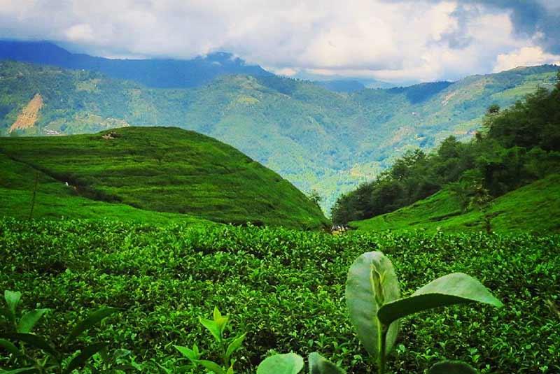 باغ چای بوتچاور - کاتماندو