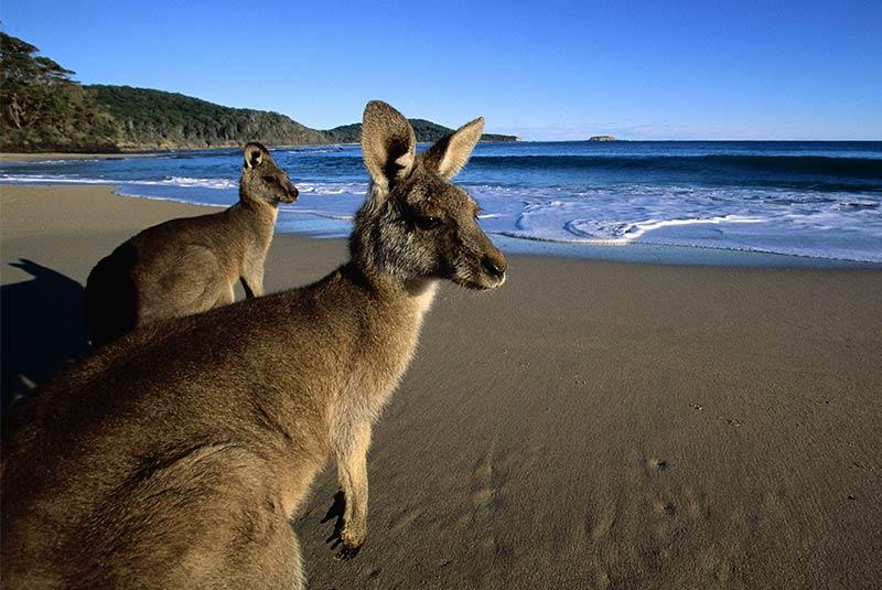 جزیره کانگورو - استرالیا