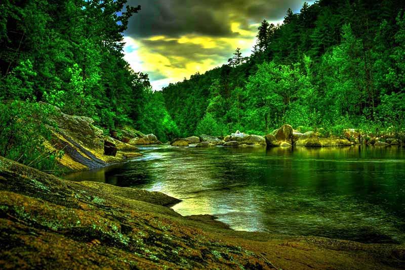 جنگل های آمازون - برزیل