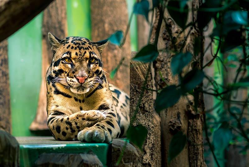 حیات وحش تایلند