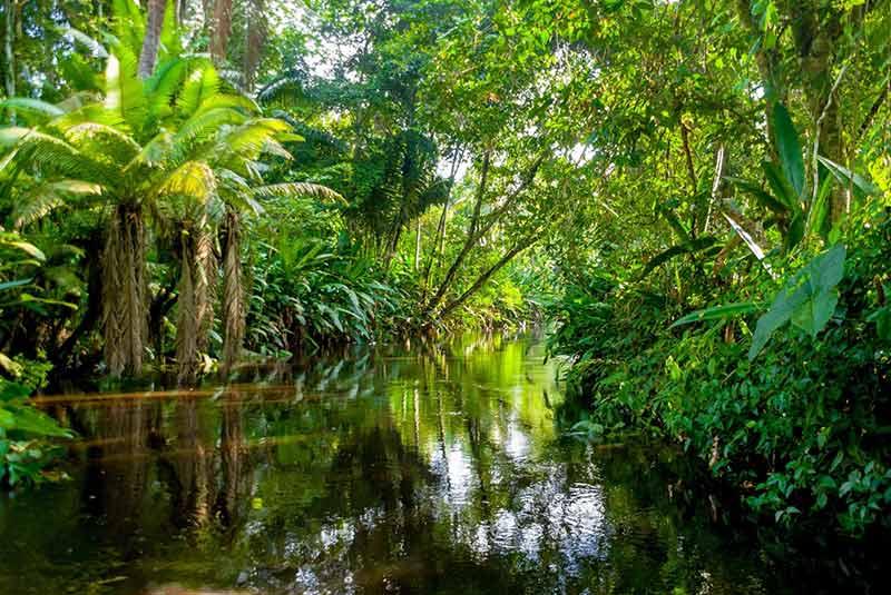 گونه های گیاهی رودخانه آمازون