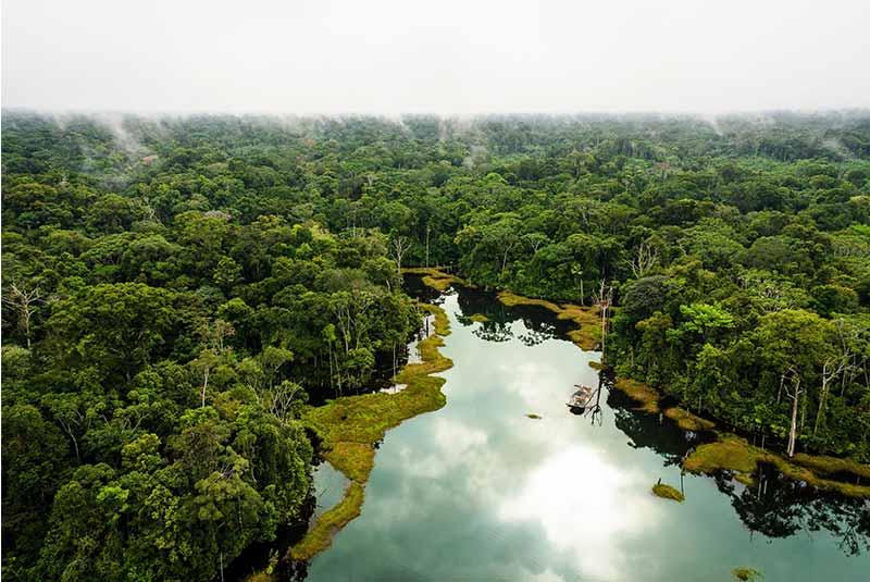 آمازون زیستگاه جانوران کمیاب