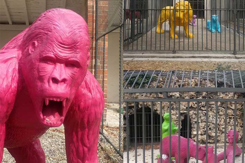 باغ وحش مجنون - مارسی