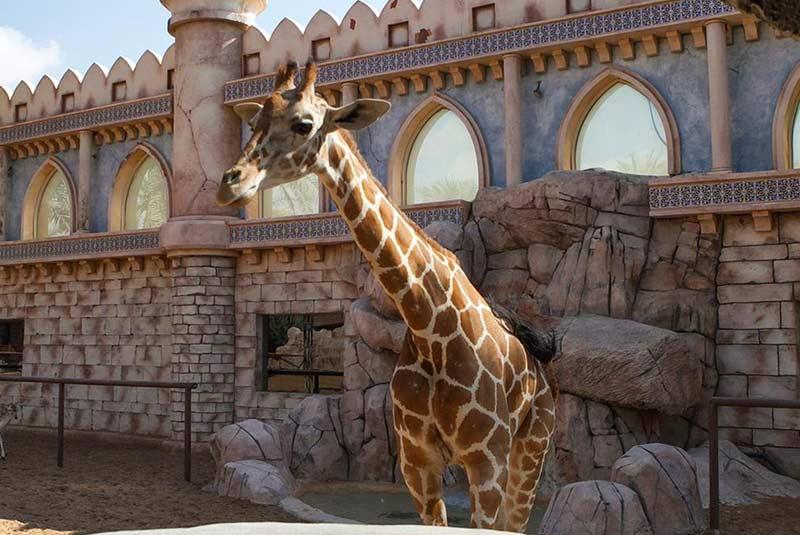 باغ وحش ابوظبی