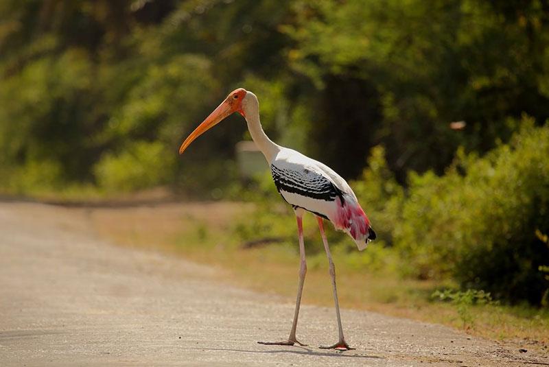 پارک ملی کلادو در هند