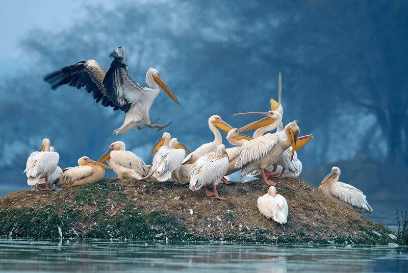 پرندگان پارک ملی کلادو