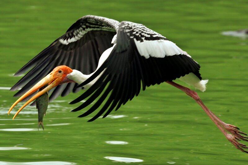 اطلاعات بازدید از پارک ملی کلادو