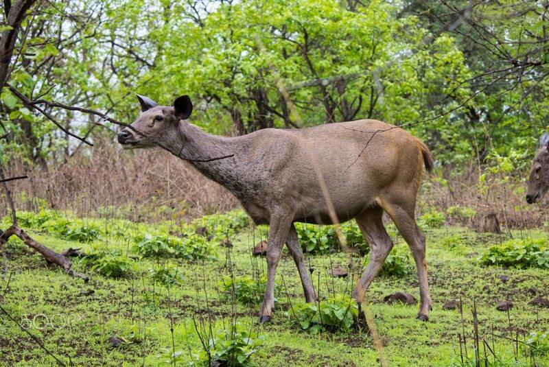 حیات وحش در پارک ملی کلادو