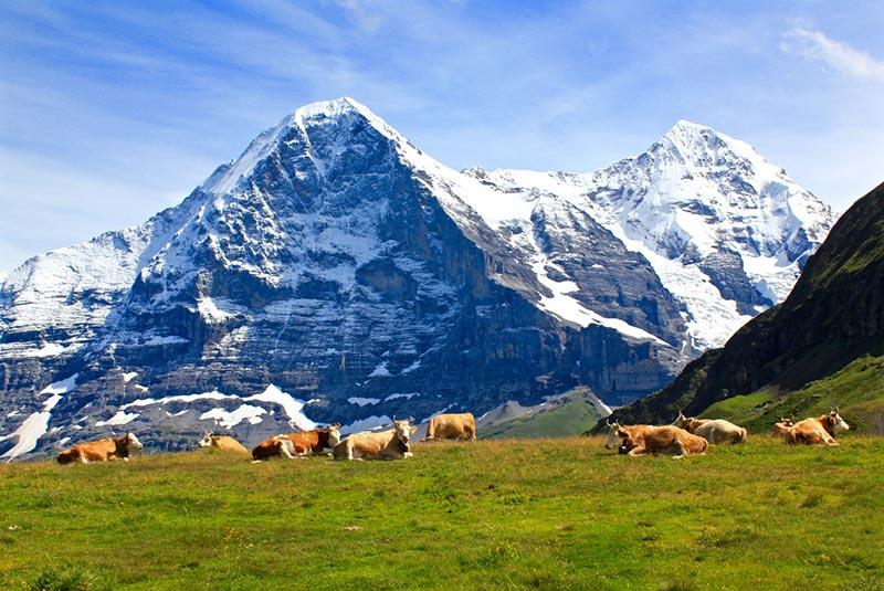کوه آیگر