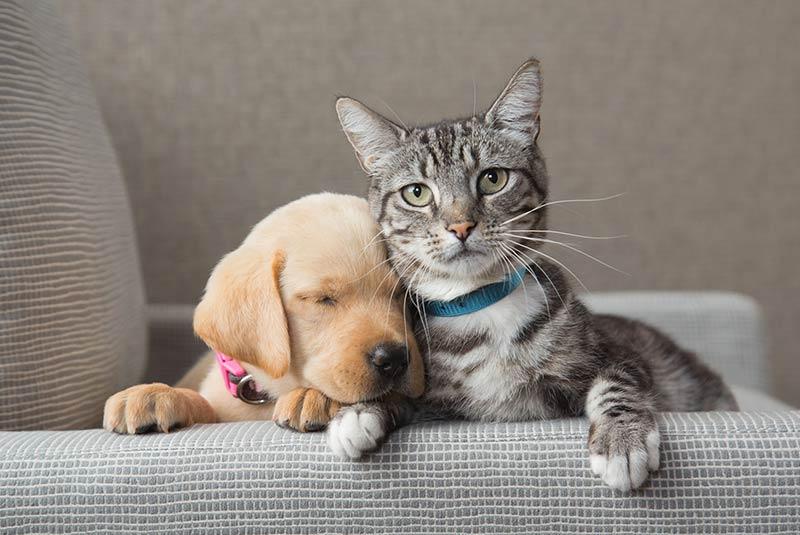 عکاسی از حیوانات خانگی