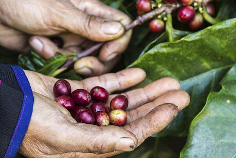 قهوه در آسیا