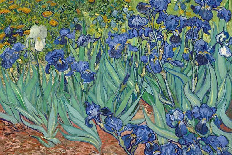بهترین نقاشی های ونگوگ - گل زنبق
