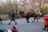 باغ وحش مونیخ