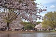پارک - توکیو