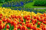 باغ های کوکنهوف آمستردام